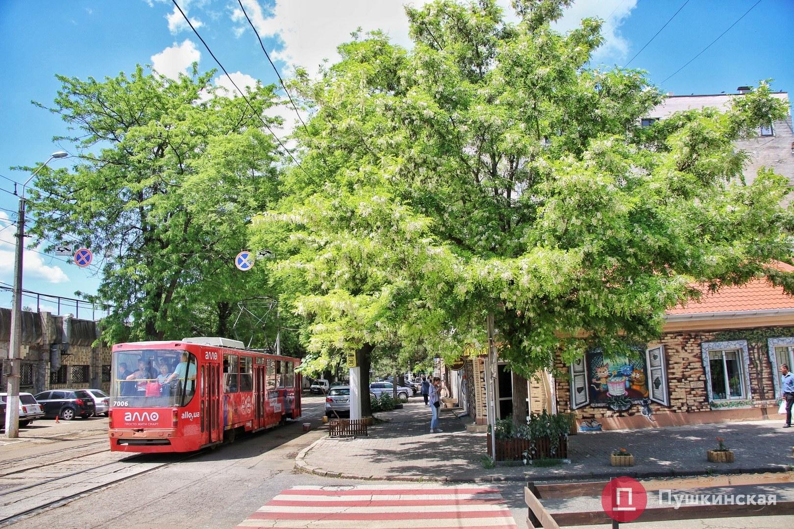 картинки деревья наших улиц